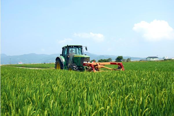 飼料用稲作