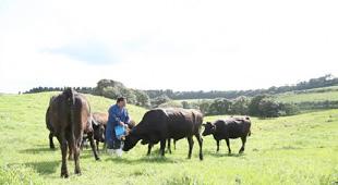 牛飼いのロマン