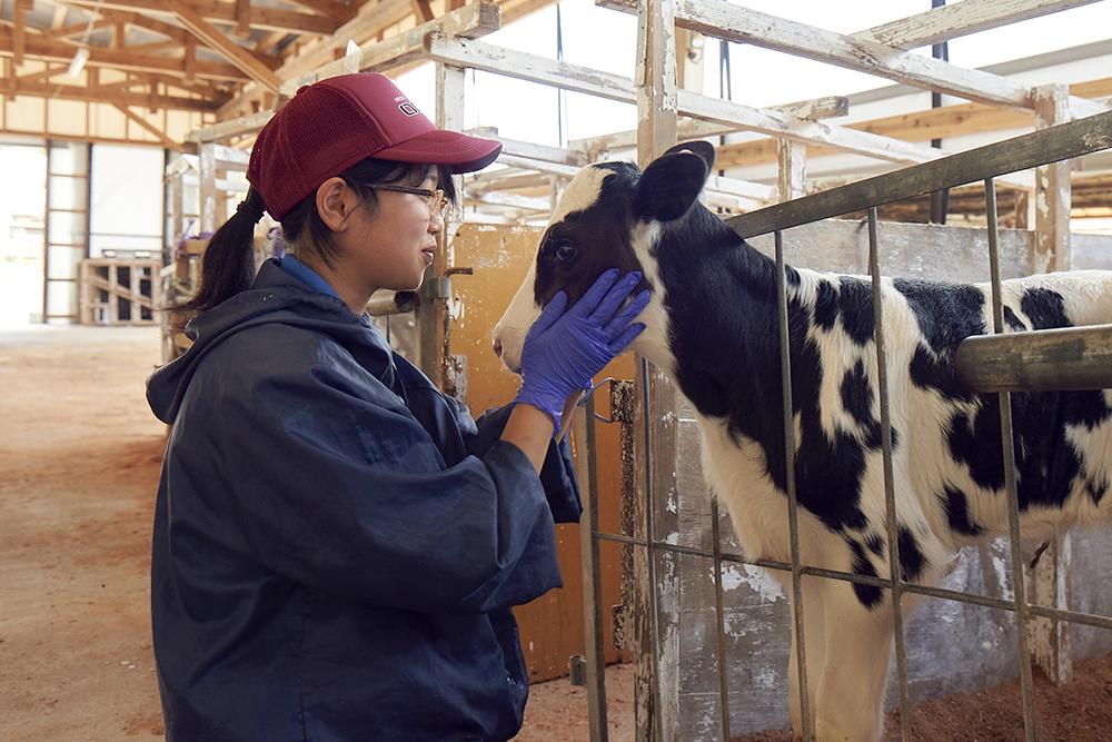 酪農体験コース